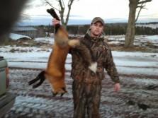 PEI Red Fox