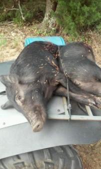 hog2015