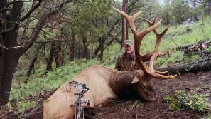 Huge elk
