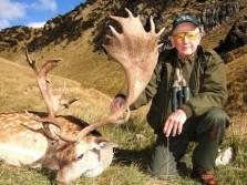 Huge Fallow Deer