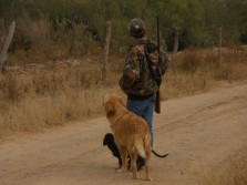 hunting deer whit dogs