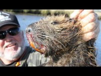 Hunting Monster Swamp Rats