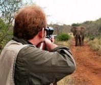 I wanna go elephant huntin'
