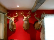 Maine bucks plus