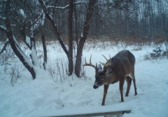 Maine Trailcam Pictures