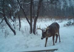 Maine Trailcam Pictures