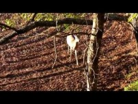 Maryland Whitetail Hunting