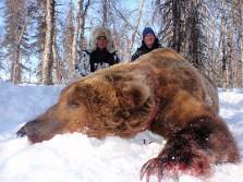 Massive 10ft Brown Bear