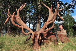 Massive Red Stag Rack