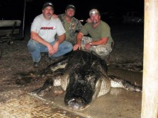 Mississippi State Record Gator