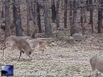 monster buck fighting