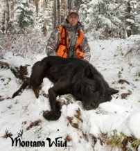 Montana Hunter Kills Huge Wolf