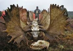 Moose for Dinner