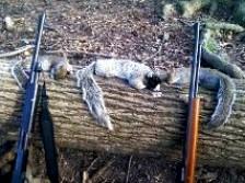 my squrriels and the first fox squrriel i killed