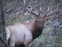 NEW MEXICO BULL ELK BOW HUNT