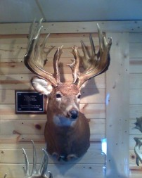 nice buck not mine but i wish it was