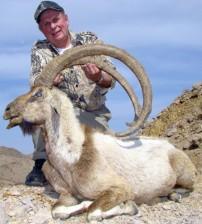 Nice Ibex Kill