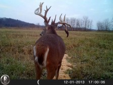 Ohio Giant -- roughkutoutdoors.com