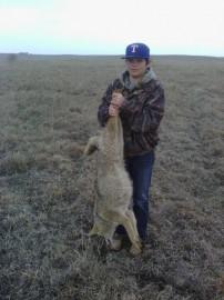 Oklahoma Coyote