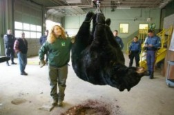 One of the Largest Black Bears in North American History Killed in N.J.
