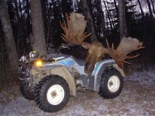 How to get a moose out of the woods