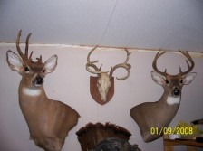 past hunts