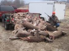 Pile O deer