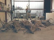 Predators at work