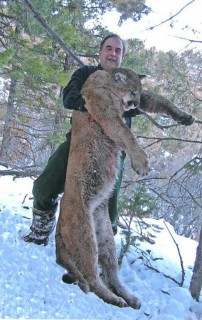 Record Mountain Lion