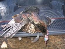 Reservation turkey.