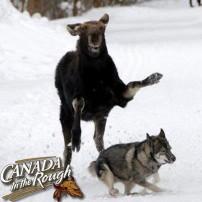 Run REX!