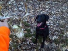 Shed hunting with your dog