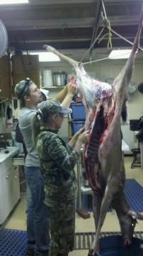 skinning my deer !