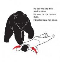 Bear Safety Instructions