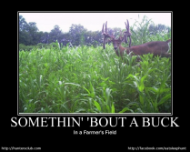 somethin' bout a buck