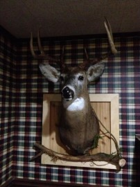 Taxidermy and background done from 2012 hunt.