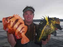 Tiger Rockfish and China Rockfish
