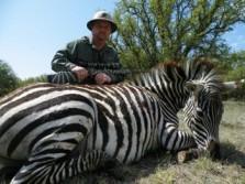 Tom's Zebra