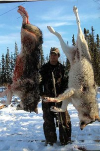 Two Big Alberta Wolves Hunted