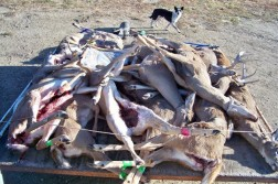 We really slammed the deer this year!
