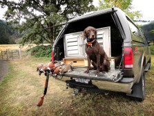 What a Great Hunting Dog
