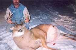 What's going on with this buck?