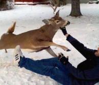 When Bucks go Bad