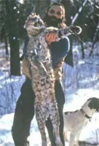 World Record Bobcat