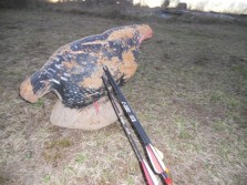 Turkey 3-D archery